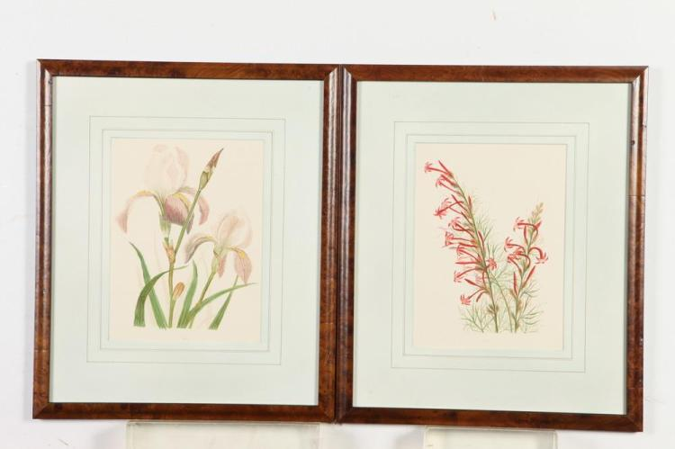 SEVEN FRAMED EMMA THAYER CHROMOLITHOS FROM WILD FLOWERS OF COLORADO WITH A DESERT IMITATION OF MODERN FASHION, All prints are of the pe