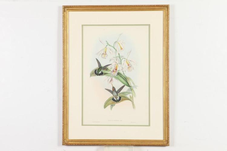 NICELY FRAMED 19TH CENTURY, OF THE PERIOD, GILTWOOD FRAMED JOHN GOULD HUMMINGBIRD LITHOGRAPH. Mid-late 19th Century. Published John Gou