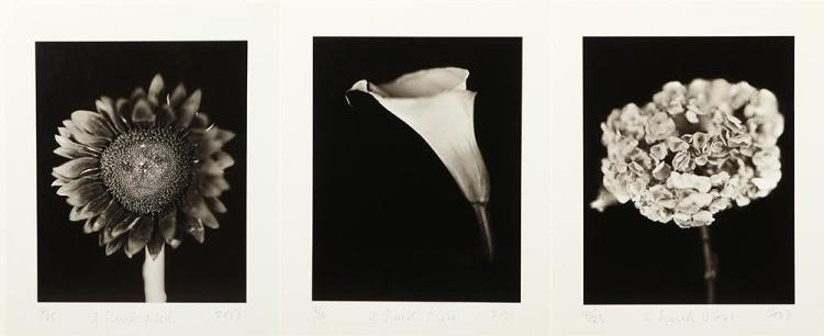 CHUCK CLOSE. (American, b. 1940). CALLA LILY, HYDRANGEA and SUNFLOWER: THREE WORKS, each signed, numbered 16/25 and dated 2007 lower ma