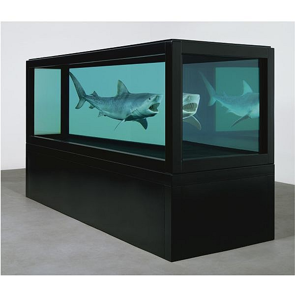 - Damien Hirst , b. 1965 The Kingdom   tiger shark, glass, steel, silicone and formaldehyde solution with steel plinth