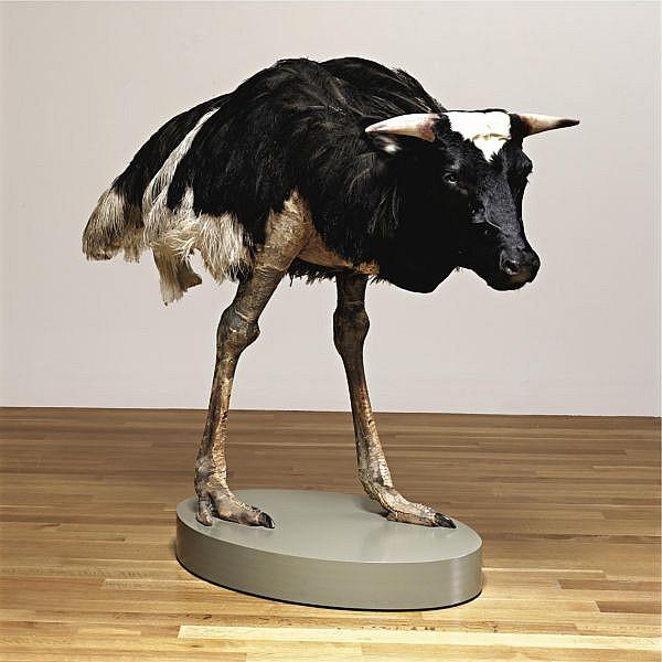 Thomas Grünfeld , b. 1956 Misfit (Cow) taxidermy