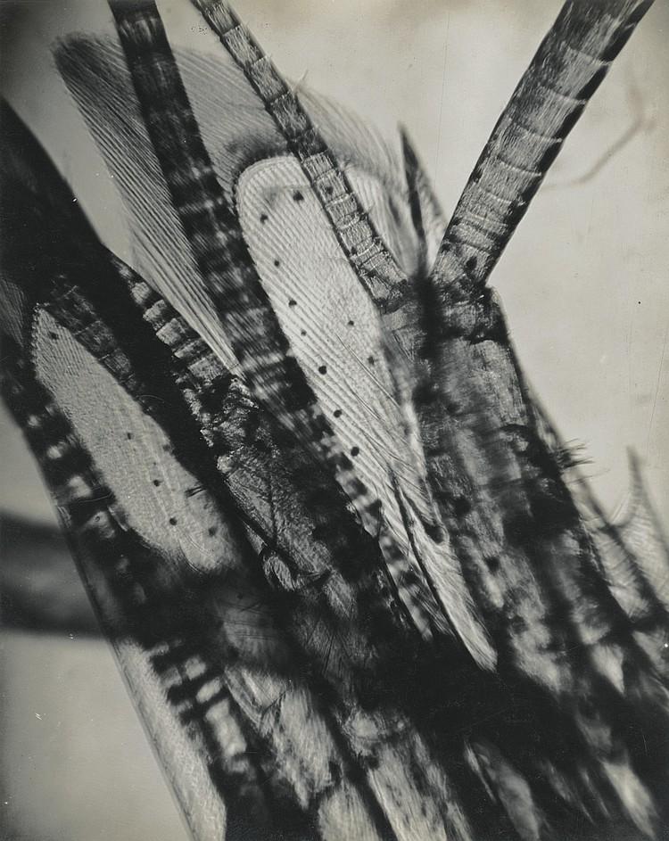 JEAN PAINLEVÉ (1902 - 1989)/ ELI LOTAR (1905 - 1970))
