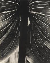 BRETT WESTON | Untitled (Lily Leaf, Carmel)