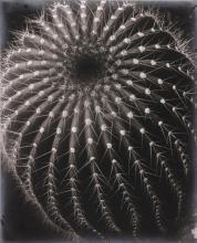 BRETT WESTON | Untitled (Cactus, Santa Barbara)