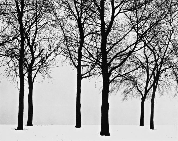 HARRY CALLAHAN | Chicago (Trees In Snow)