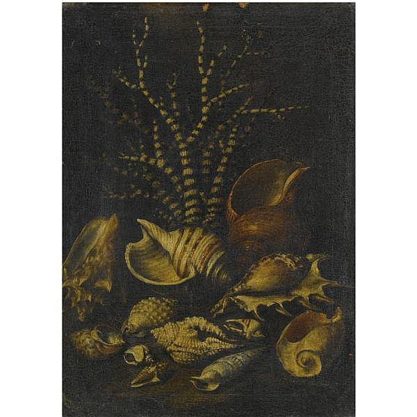 - Attributed to Bartolomeo Bimbi , Settignano, Florence 1648 - 1730 Florence A still life with a Lambis lambis, a Cypraea, a Cymatiide, a Cenithium, a Galaodea and other shells   oil on canvas