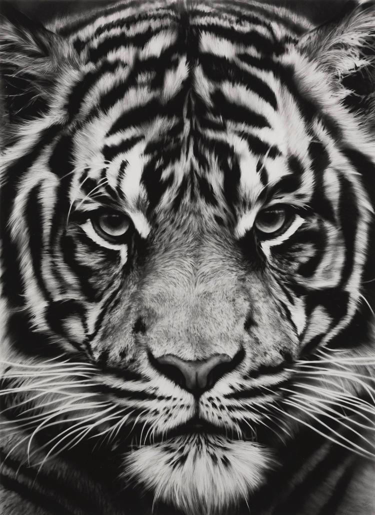ROBERT LONGO | Untitled (Tiger)