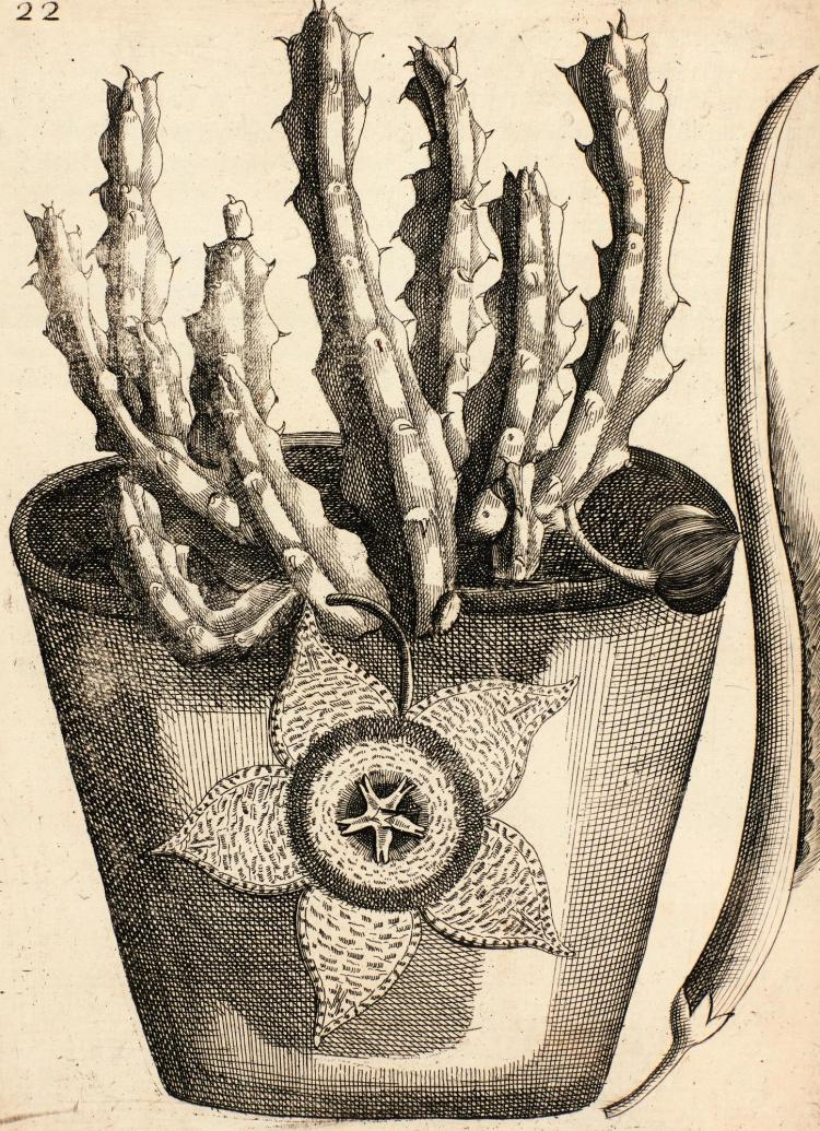 BRADLEY, THE HISTORY OF SUCCULENT PLANTS, 1739