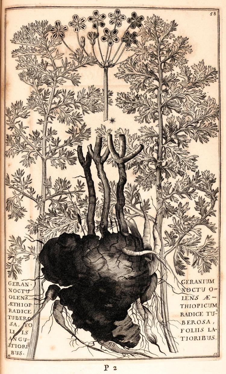 BREYNE, JACOB. EXOTICORUM...PLANTARUM CENTURIA PRIMA. 1678