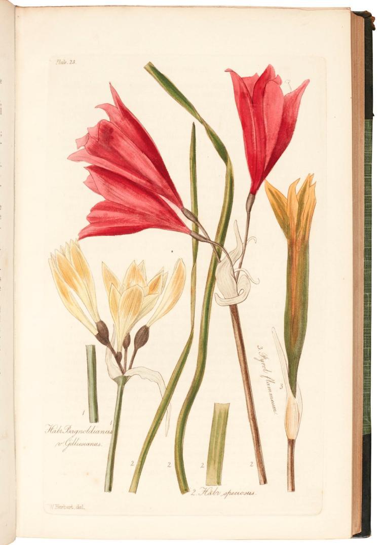 HERBERT. AMARYLLIDACEAE. 1837