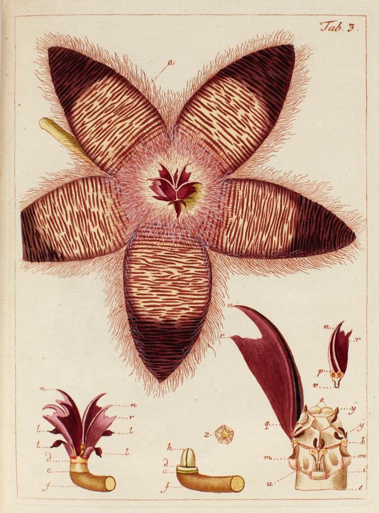 JACQUIN. MISCELLANEA AUSTRIACA. 1778