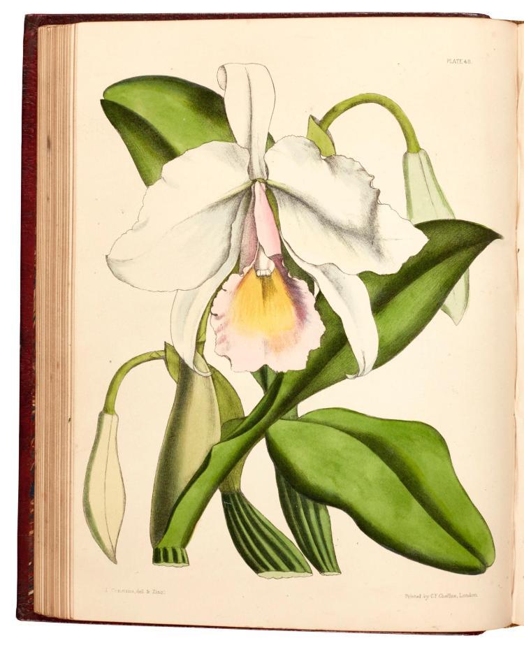 PAXTON. FLOWER GARDEN. 1853