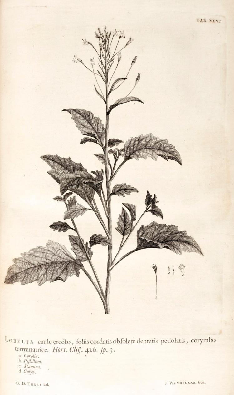 LINNAEUS. HORTUS CLIFFORTIANUS. 1737