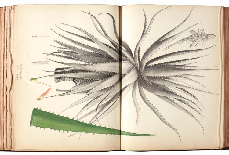 SALM-REIFFERSCHEIDT-DYCK. MONOGRAPHIA GENERUM ALOES ET MESEMBRYANTHEMI 1836-1863