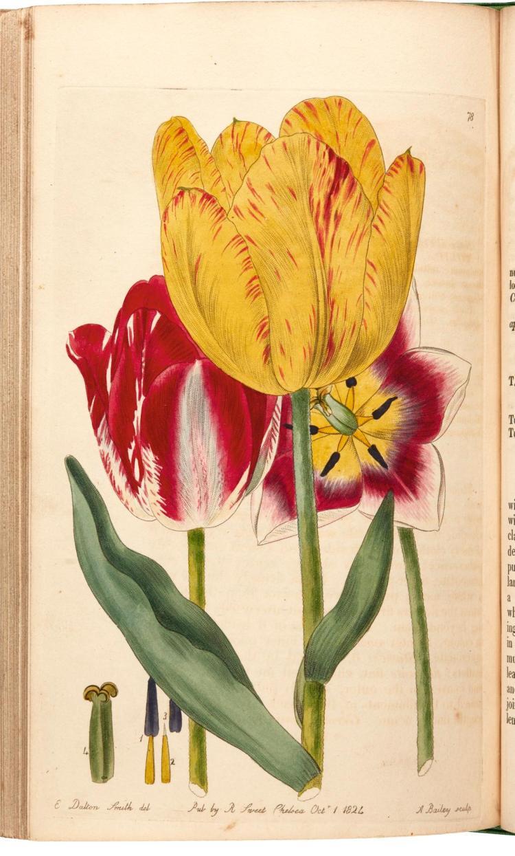 ROBERT SWEET. BRITISH FLOWER GARDEN 1843