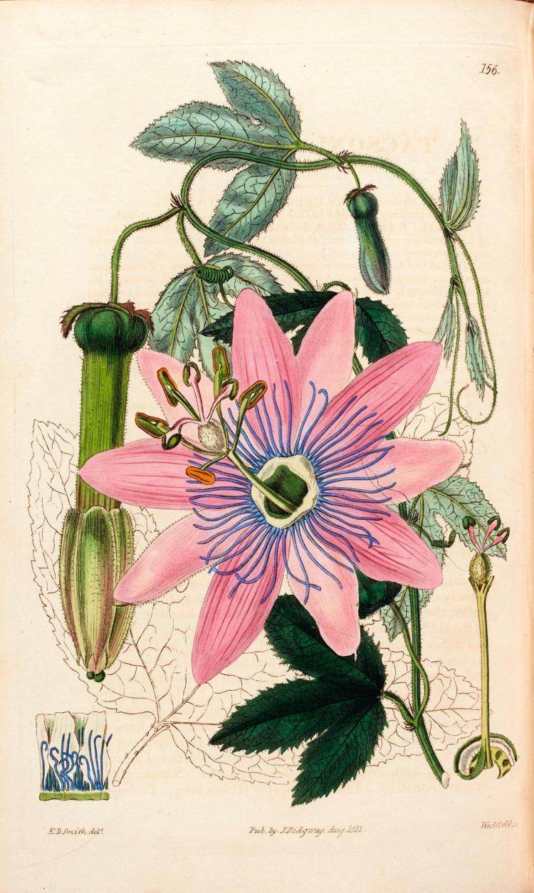 ROBERT SWEET. BRITISH FLOWER GARDEN. 1823–1838