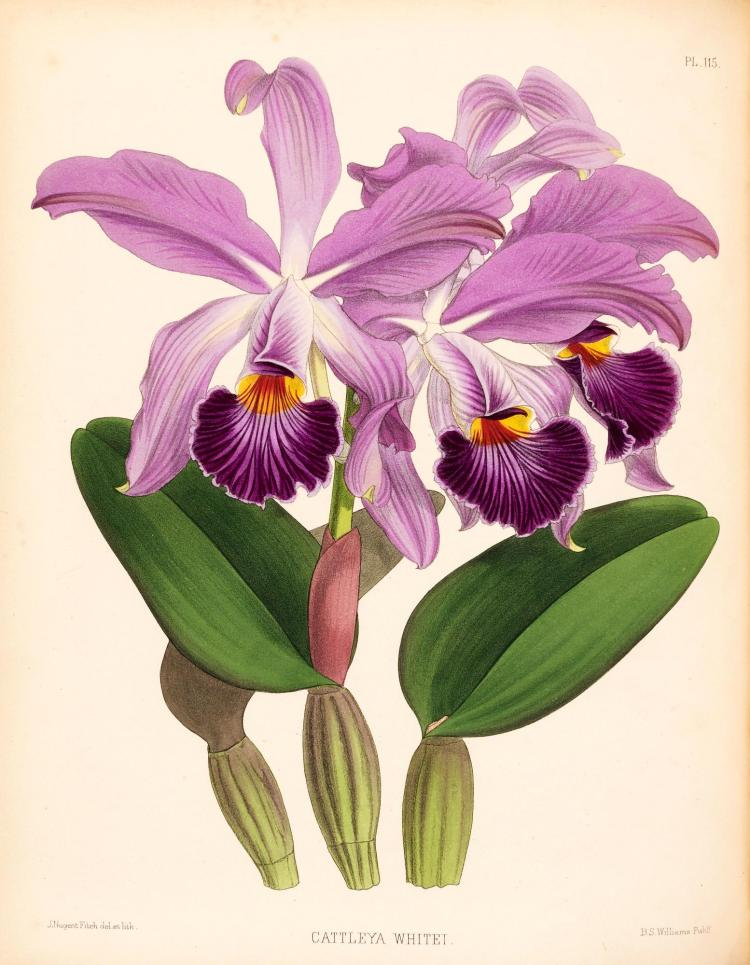 WARNER ET AL., THE ORCHID ALBUM, 1882