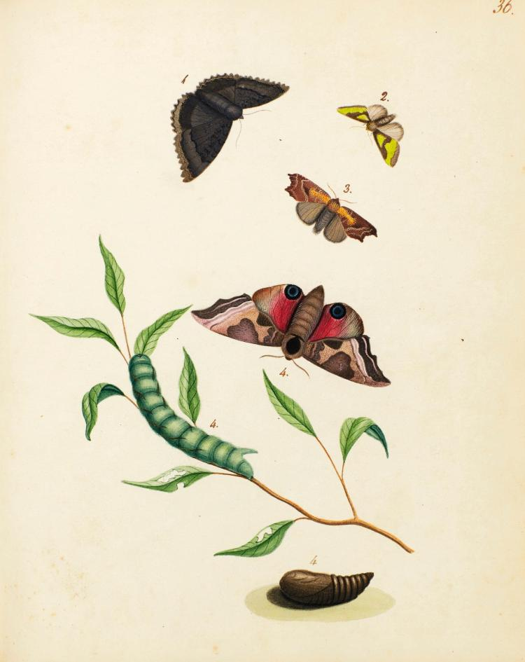 ENTOMOLOGICAL AND ORNITHOLOGICAL WATERCOLOURS