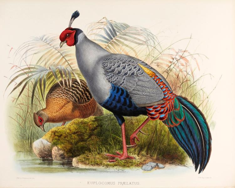 ELLIOT, MONOGRAPH OF THE PHASIANIDAE, OR FAMILY OF THE PHEASANTS, NY, 1870-1872, 2 VOL., FOLIO, COLOURED PLATES