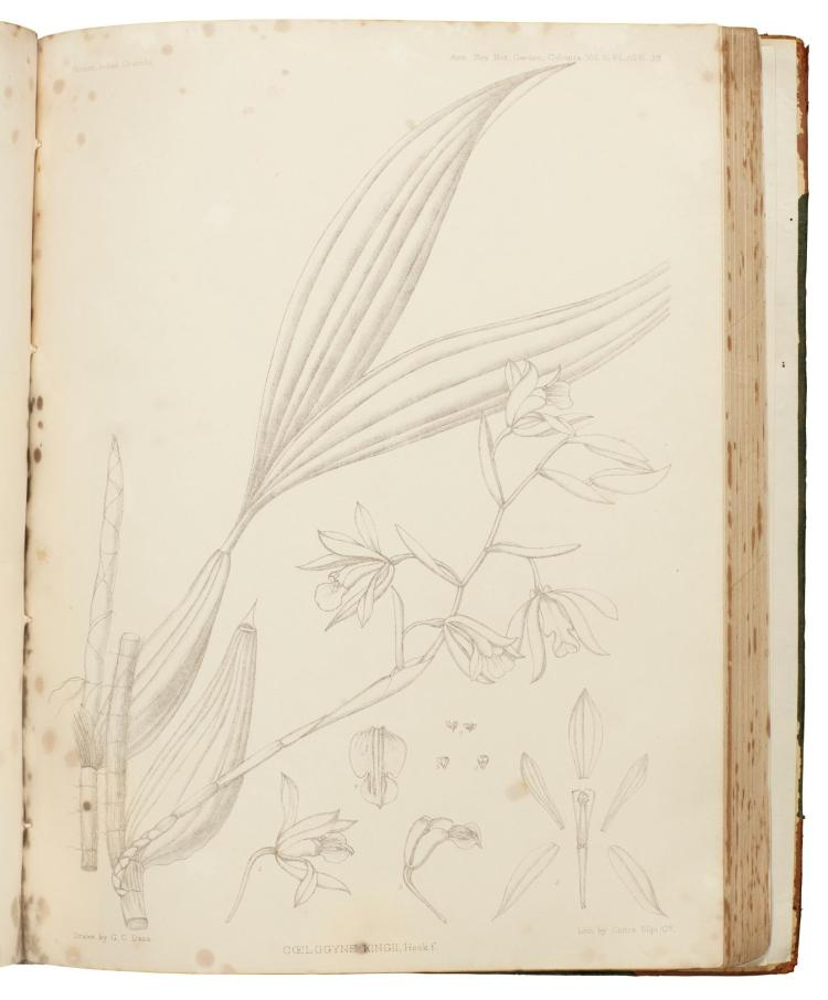 HOOKER, A CENTURY OF INDIAN ORCHIDS, 1895 (1 VOL.)