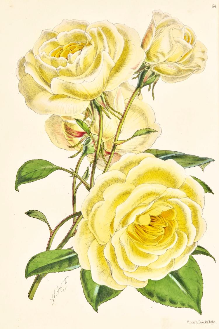 THE FLORAL MAGAZINE, 1861-1871, 10 VOL., HAND-COLOURED PLATES, CONTEMPORARY GREEN CALF GILT