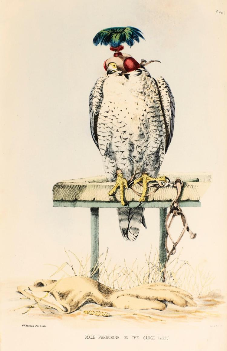 SALVIN AND BRODRICK. FALCONRY IN THE BRITISH ISLES, 1855