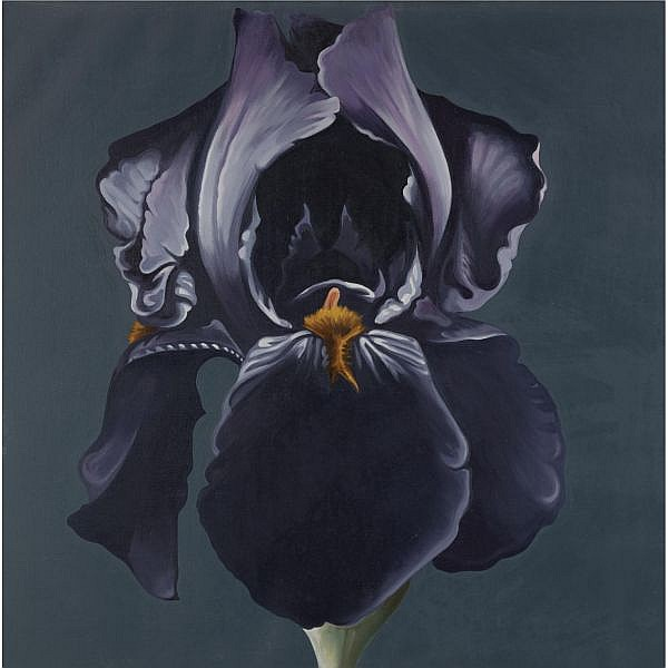 Lowell Nesbitt , 1933-1993 Dark Iris oil on canvas