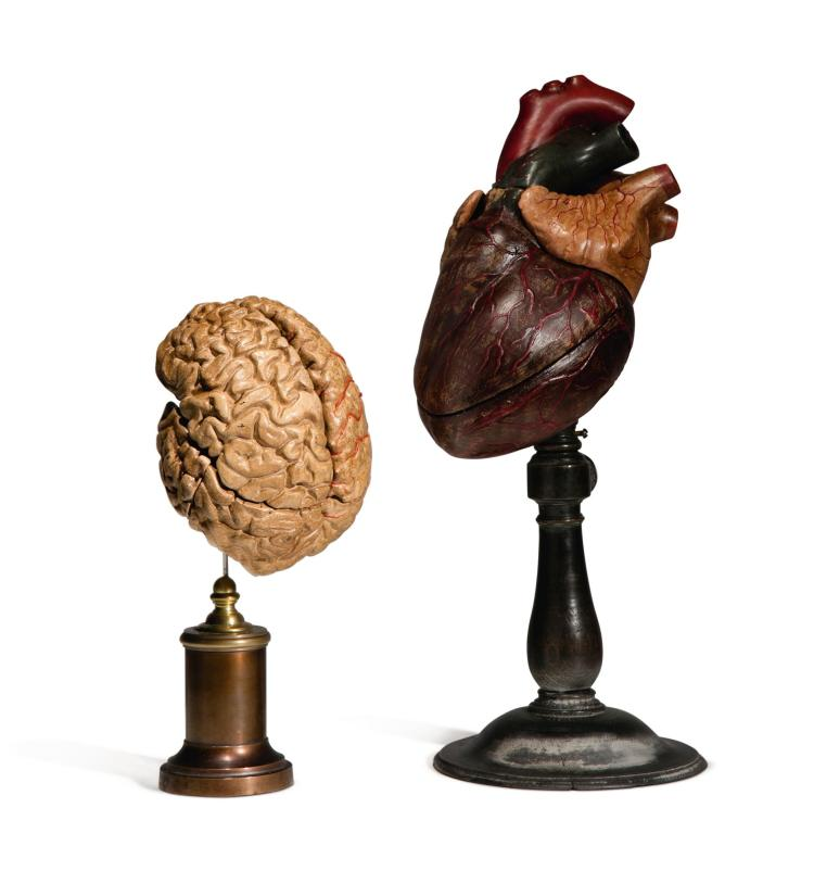 TWO VICTORIAN POLYCHROME ANATOMICAL MODELS OF A HEART AND BRAIN, POSSIBLY ITALIAN, LAST QUARTER 19TH CENTURY |