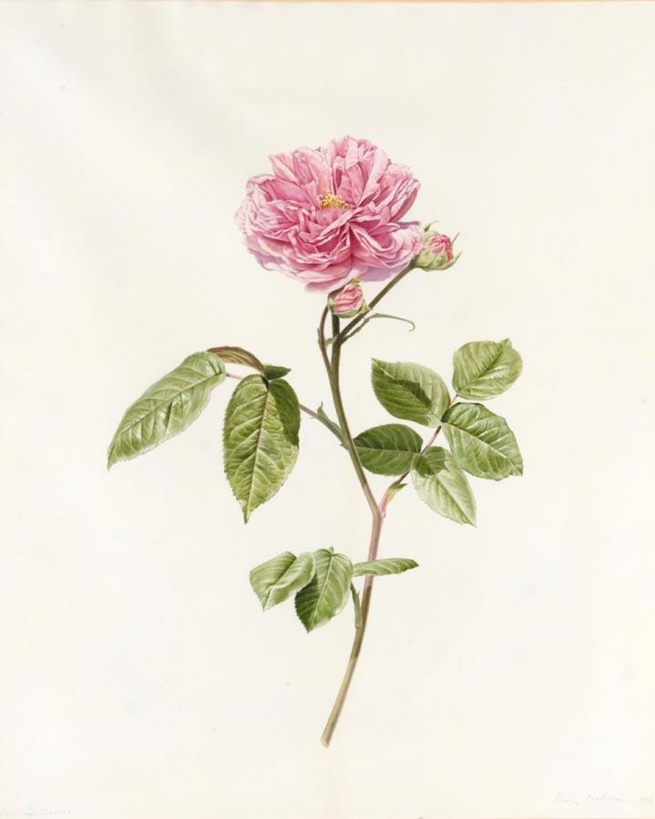 RORY MCEWEN 1932-1982 STUDY OF CAROLE TESTOUT, A PINK ROSE