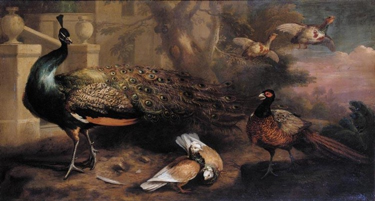 MARMADUKE CRADOCK C.1660 - 1717 AN ASSEMBLY OF FOWL, INCLUDING A PEACOCK, PIGEONS, PHEASANT AND