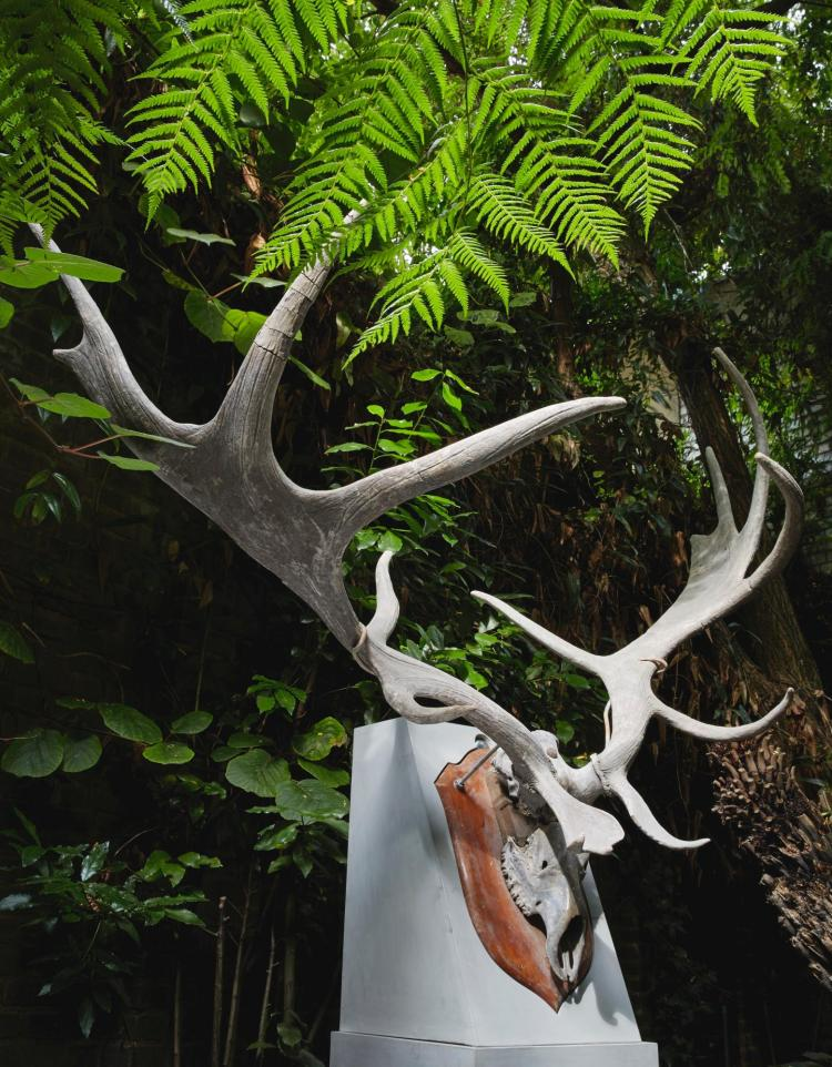 A PAIR OF FOSSILISED 'IRISH ELK' ANTLERS, PREHISTORIC |