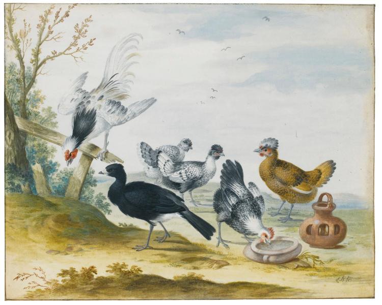 JOHANNES BRONCKHORST | Poultry