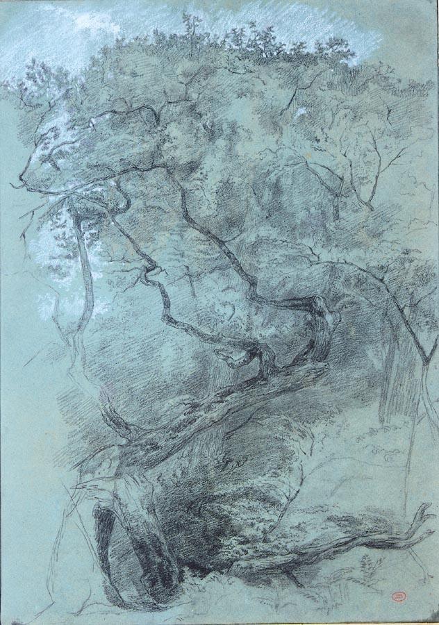 f - PAUL HUET PARIS 1803 - 1869 STUDY OF A TREE STRUCK BY LIGHTNING IN A FOREST