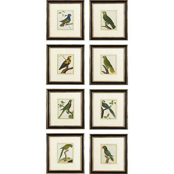 A set of eight studies of exotic parrots by François-Nicolas Martinet (1725-1804), Edited by the Comte de Buffon (1707-1788)