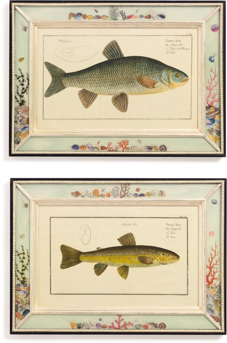 A SET OF NINE HAND-COLORED ENGRAVINGS OF FISH BY MARCUS ELIESER BLOCH (1723-1799) LATE 18TH CENTURY |