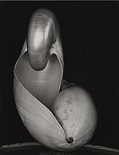EDWARD WESTON   Shell (Double Nautiluses)