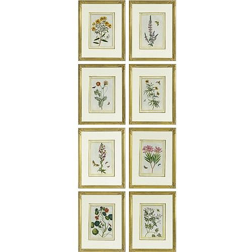 A set of eight botanical natural history studies after Pierre Joseph Buchoz