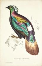GOULD. A CENTURY OF BIRDS FROM THE HIMALAYA MOUNTAINS. 1831