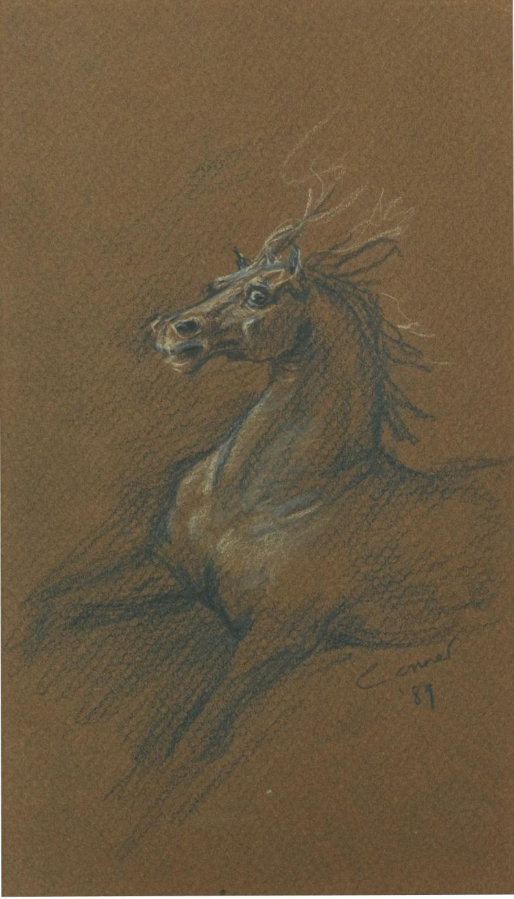 ANGELA CONNER | Study of a Horse