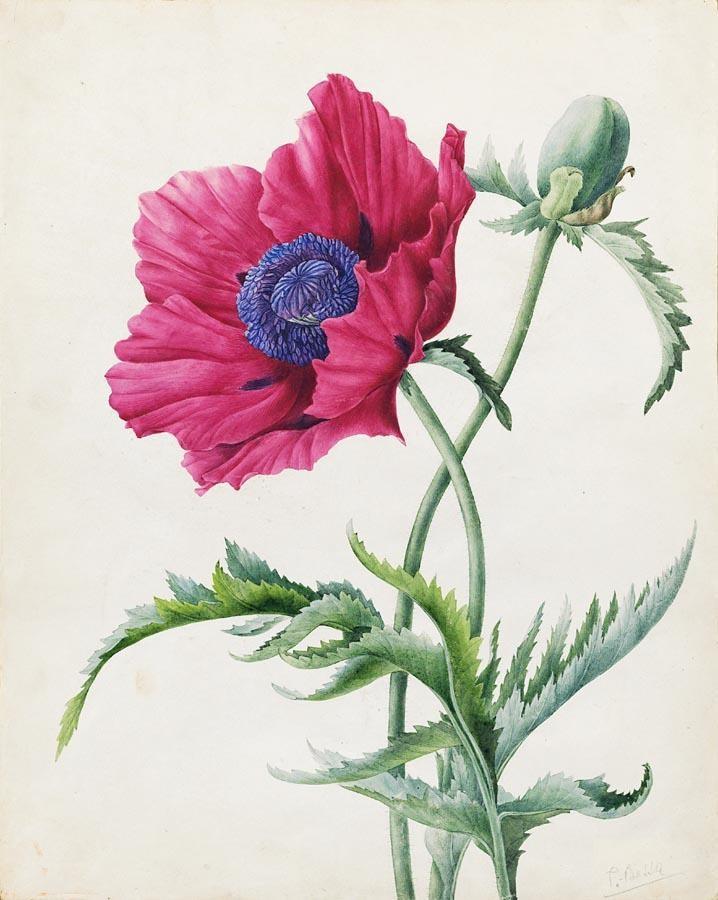 * PANCRACE BESSA PARIS 1772 - 1835 ECOUEN