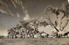 MARGARET BOURKE-WHITE | Great Migration: Emigrant trains of Sikhs