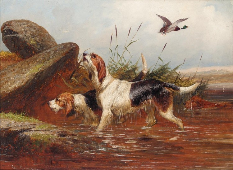 COLIN GRAEME ROE D. 1910 A PAIR OF OTTER HOUNDS; A PAIR OF SETTERS