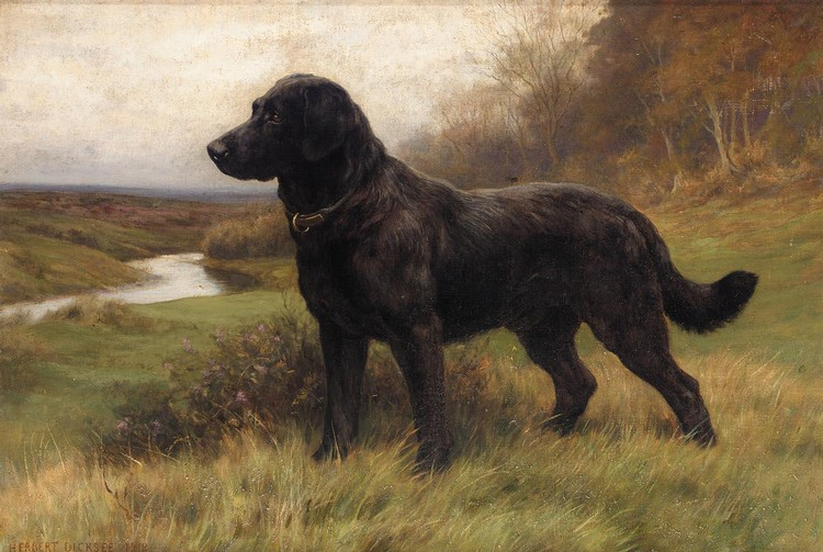 HERBERT THOMAS DICKSEE 1862-1942 ON ALERT, A BLACK LABRADOR
