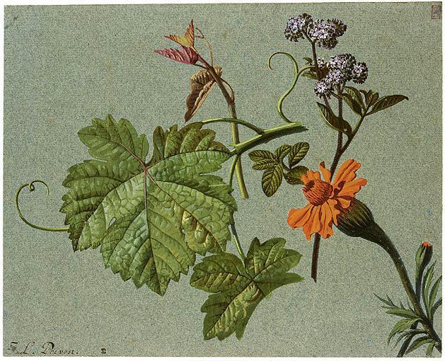 u - *Jean-Louis Prévost circa 1760-1810