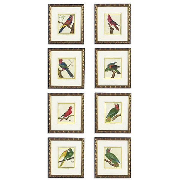 A set of eight studies of parrots by François-Nicolas Martinet (1725-1804), edited by Comte de Buffon (1707-1788)