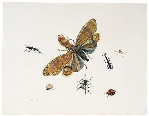*Herman Henstenburgh (1667-1726) an extraordinary moth and other insects.  Signed with monogram, in