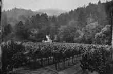 SOLD-OUT VERTICAL COLLECTION FROM CULT WINE SCARECROW AND A VISIT TO THE NAPA ESTATE [2 GUESTS] |