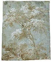 VENETIAN SCHOOL, 16TH CENTURY | Study of a tree