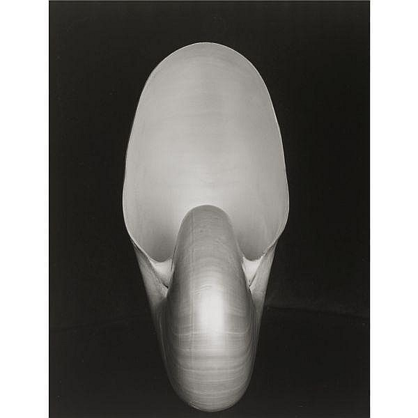Edward Weston (1886 - 1958)/Cole Weston (1919 - 2003) , 'SHELL' (NAUTILUS)
