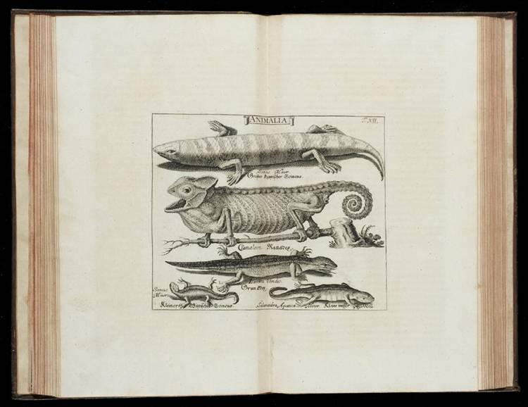 LOCHNER, MICHAEL FRIEDRICH (DIED 1720) AND JOHANN HEINRICH (DIED 1715).